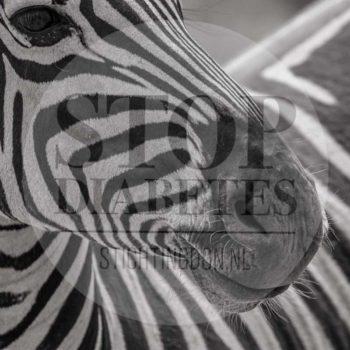 © zebra - Humberto Tan - One day gallery